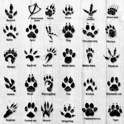 Animal Paw SVG Cut File