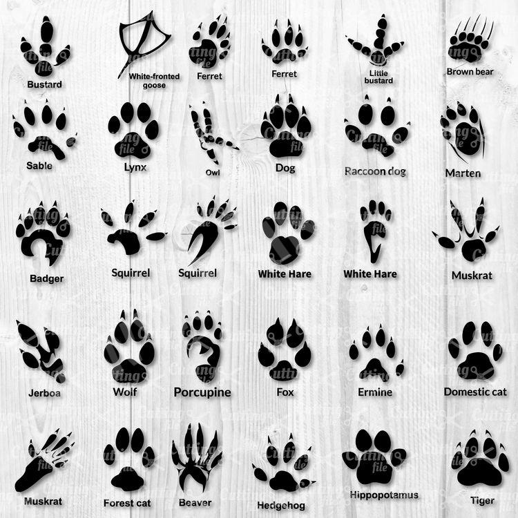 Animal Paw SVG Cut File